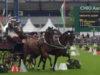 Hackneys de Argentina en Aachen 7/2017 (Video)